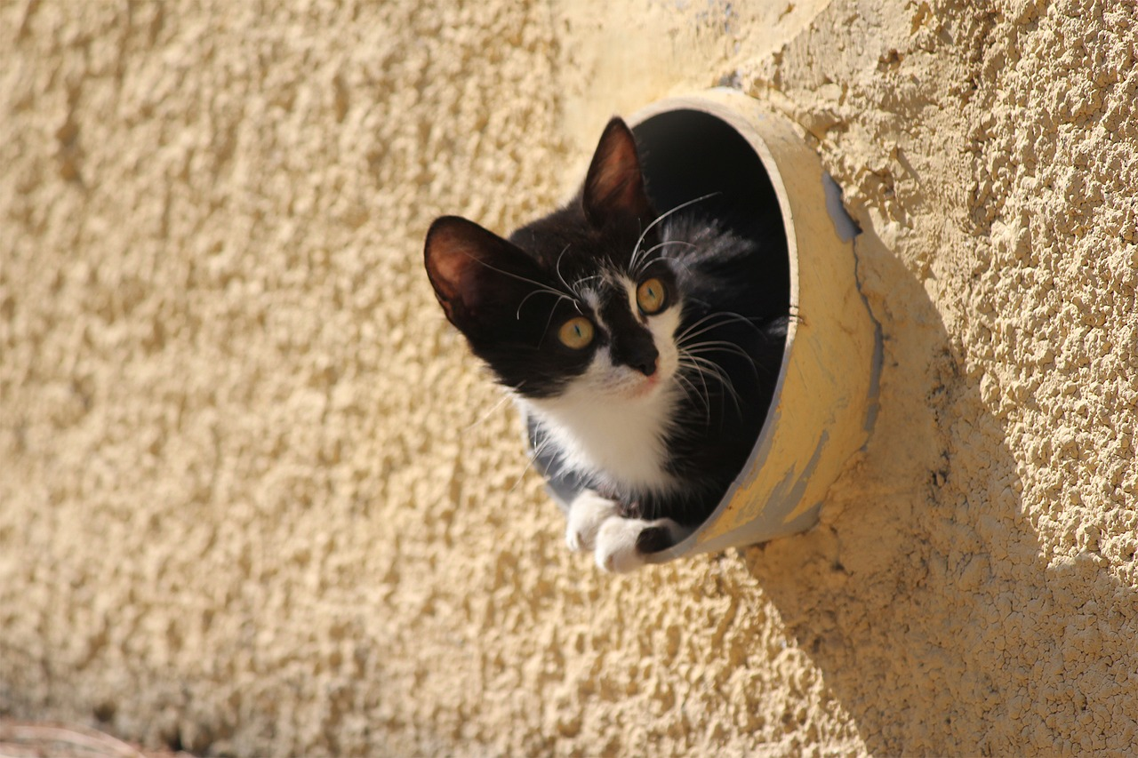 Cute cat sitting in a pipe on the Greek island of Chios