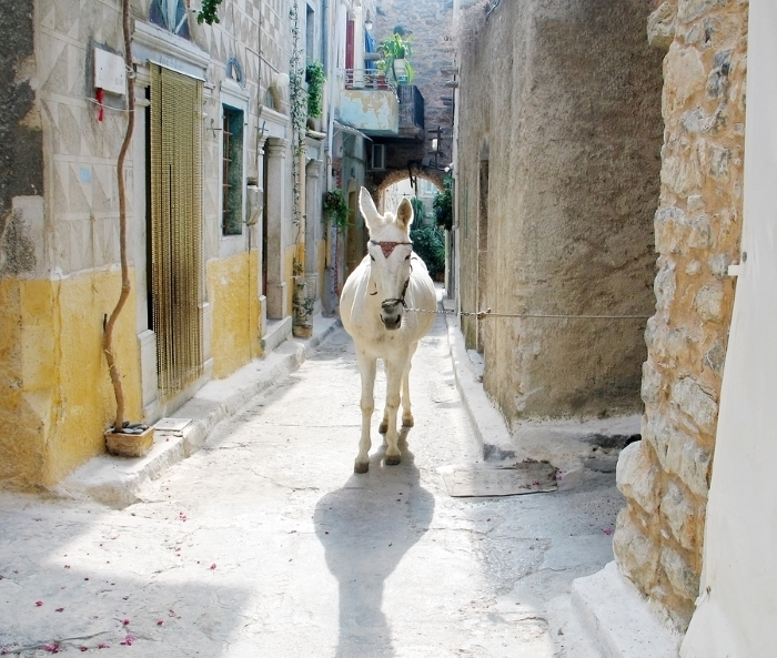 Donkey in the narrow streets of a Chios Village