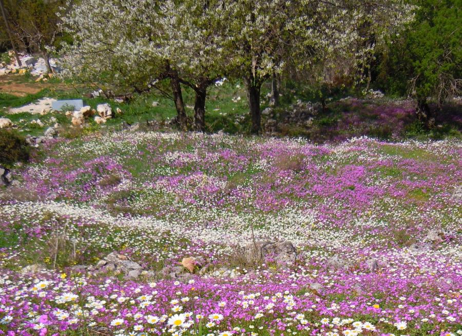 Corfu Spring Flowers