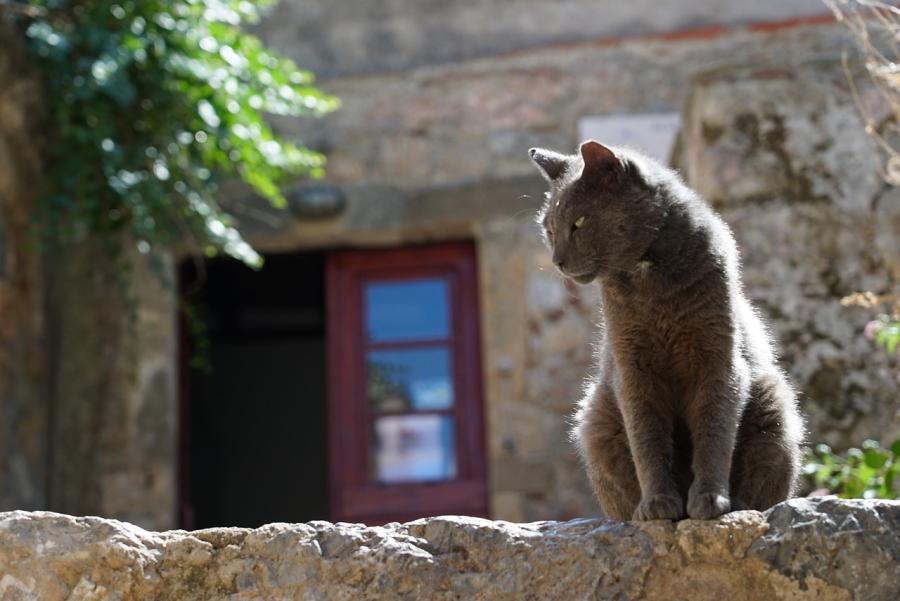 Cat in Monemvasia in Greece