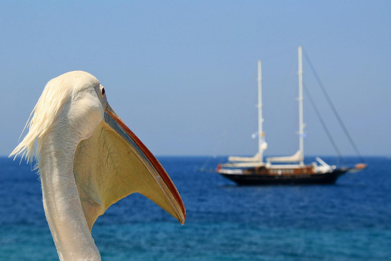 Petros the Pelican, the Mascot of Mykonos