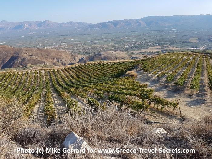The vineyards at the Zacharioudakis Winery on Crete
