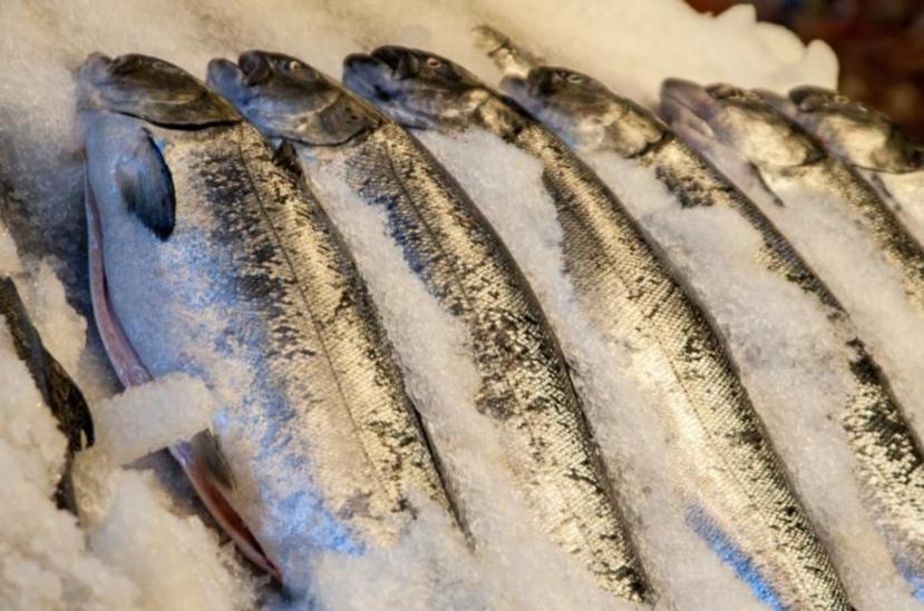 Fresh fish for sale on Crete